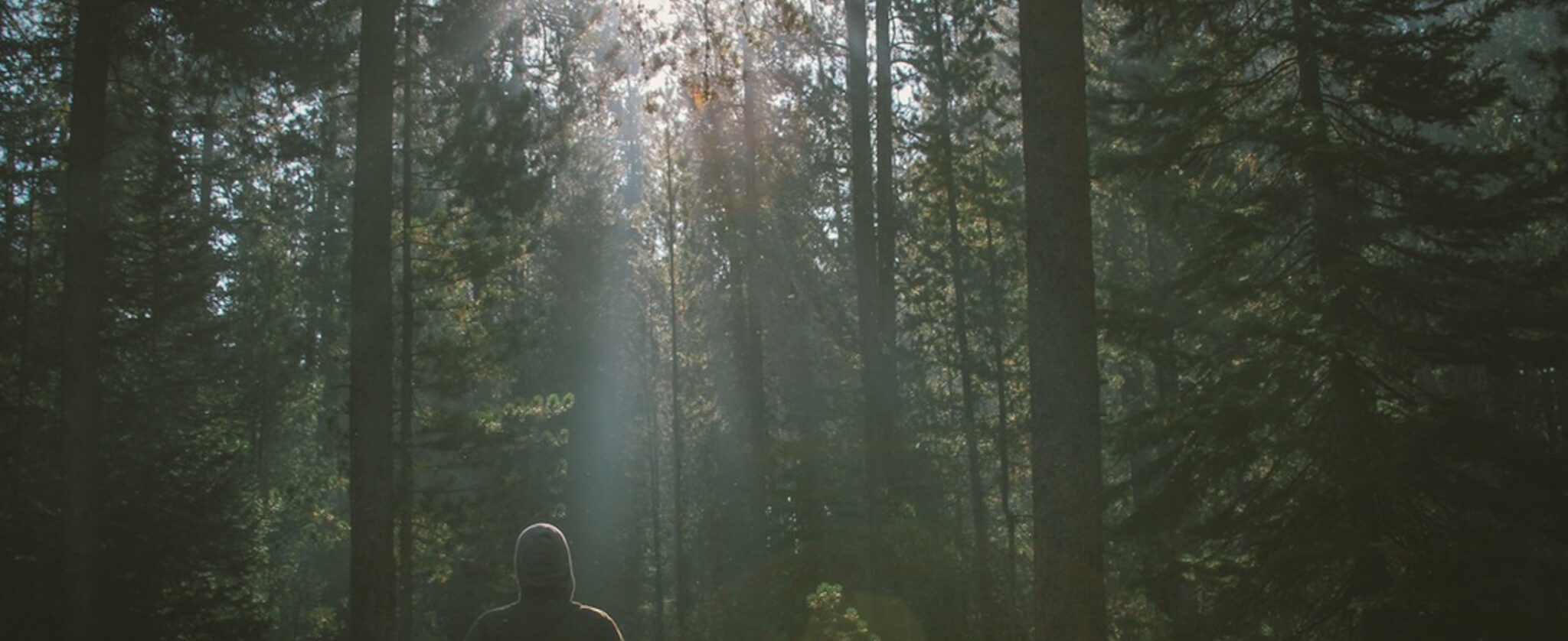 Man strolling through a deep green forest with sun shining through